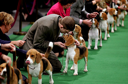 dismissal of worker found at a canine show